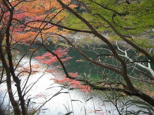 神戸の山の紅葉_b0051598_2261214.jpg