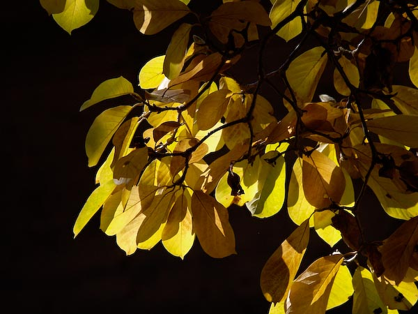 2008/11秋色の写真_c0137403_2218615.jpg