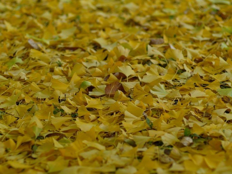 2008/11秋色の写真_c0137403_2248874.jpg