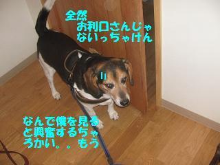 d0104209_2264778.jpg