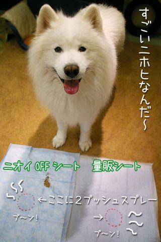 ライオンペット用品モニター②_c0062832_20224665.jpg