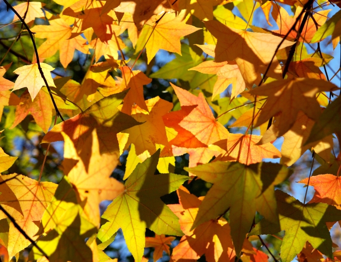 Autumn leaves_d0145934_1110715.jpg
