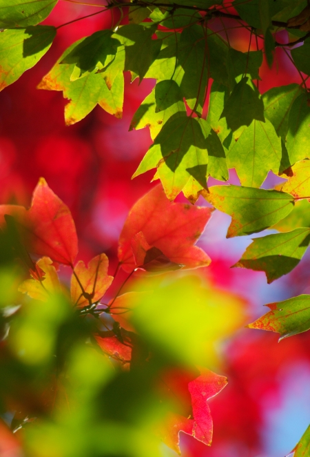 Autumn leaves_d0145934_11111197.jpg
