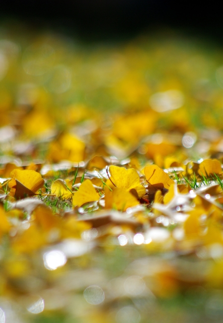 Autumn leaves_d0145934_1114210.jpg