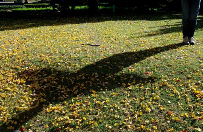 Autumn leaves_d0145934_1171883.jpg