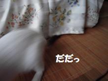 c0139488_15262785.jpg