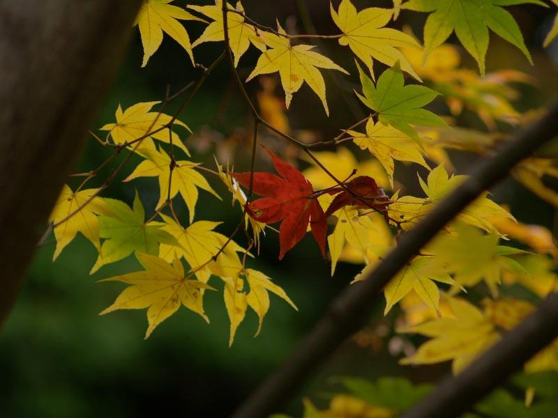 2008/11秋色の写真_c0137403_20102210.jpg
