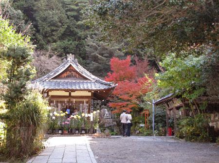 紅葉を訪ねて 大豊神社_e0048413_22123092.jpg