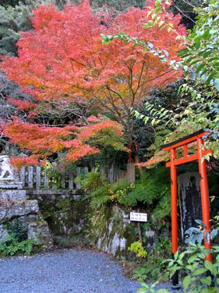紅葉を訪ねて 大豊神社_e0048413_22124277.jpg