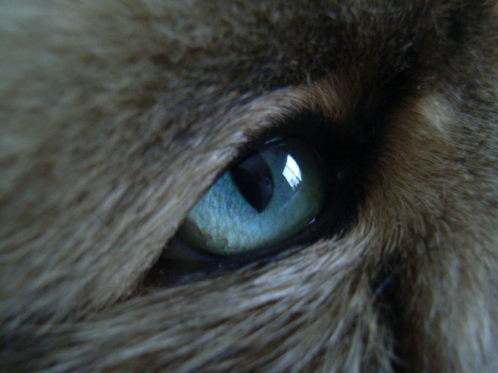 ネコの目_c0025115_181027.jpg