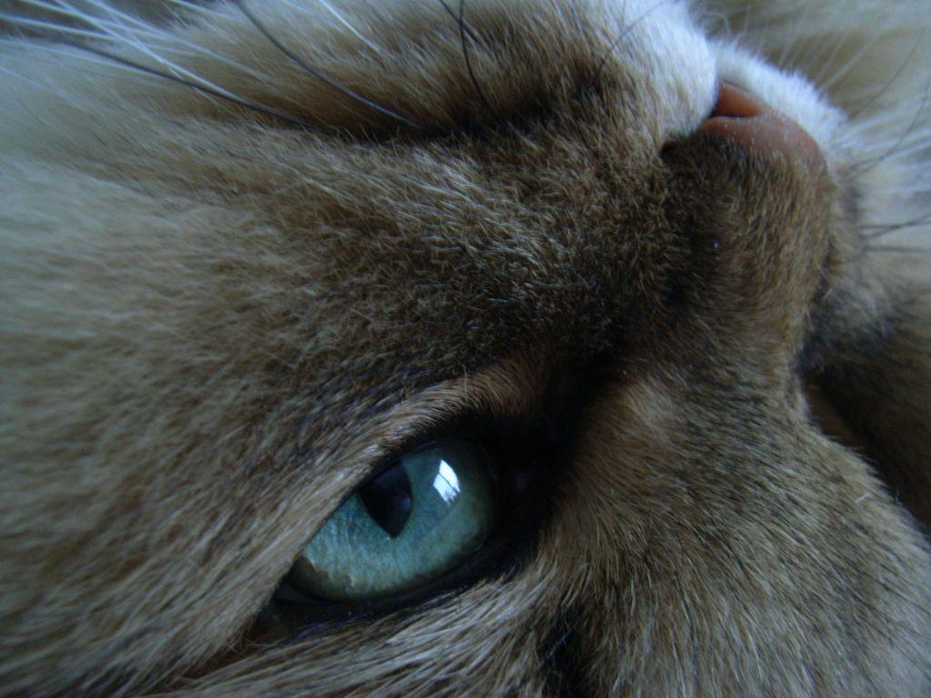 ネコの目_c0025115_18111056.jpg