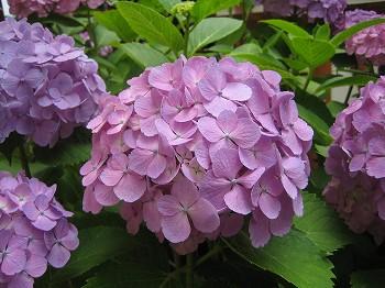 2008 LOG春の風景 2_c0038619_0192630.jpg