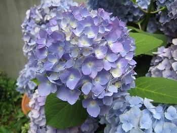 2008 LOG春の風景 2_c0038619_0195530.jpg