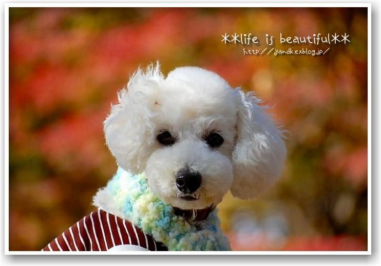 it\'s a clear autumn day_d0083623_20211573.jpg