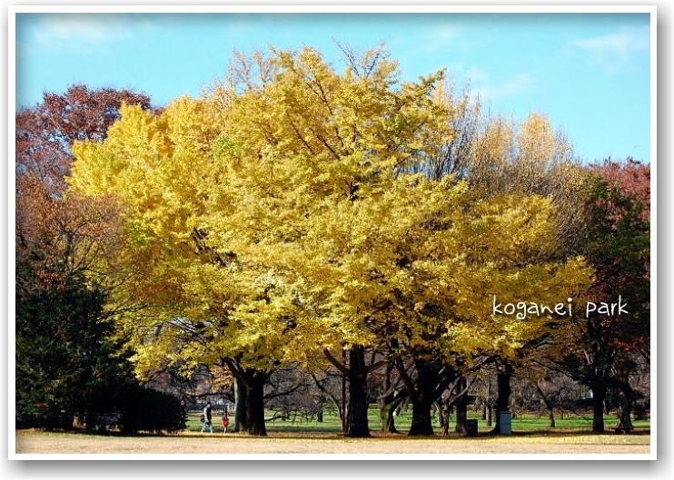 it\'s a clear autumn day_d0083623_20223499.jpg