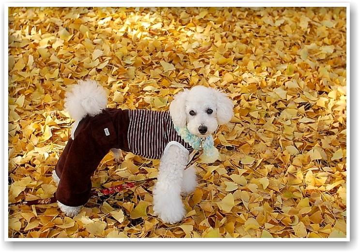 it\'s a clear autumn day_d0083623_20232915.jpg