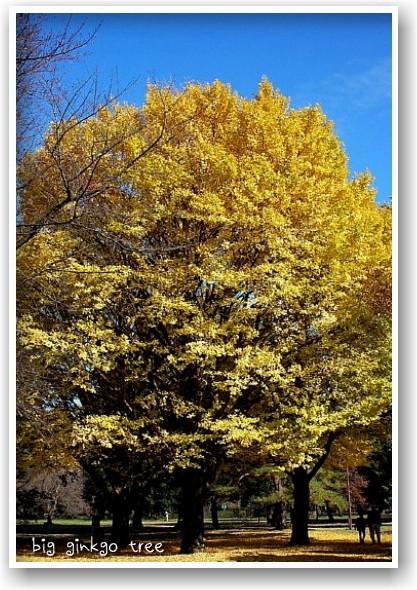 it\'s a clear autumn day_d0083623_20244198.jpg