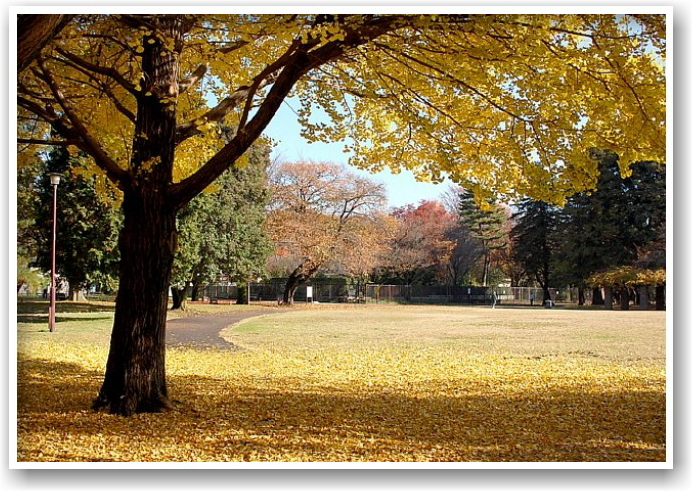 it\'s a clear autumn day_d0083623_20245673.jpg