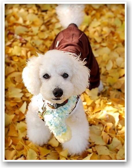 it\'s a clear autumn day_d0083623_20251385.jpg