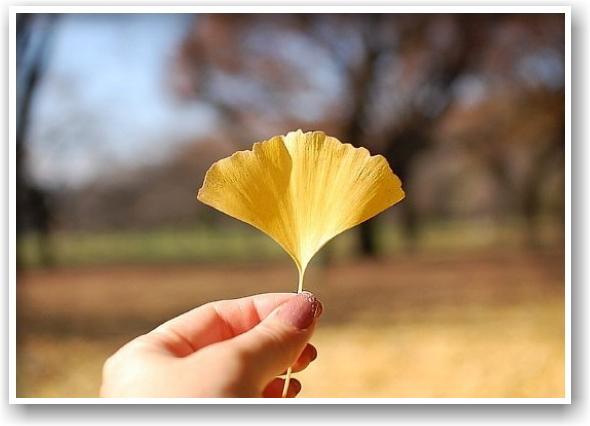 it\'s a clear autumn day_d0083623_20285030.jpg