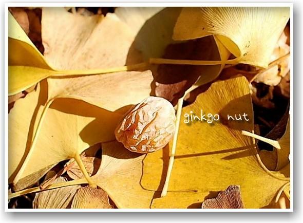 it\'s a clear autumn day_d0083623_203037.jpg
