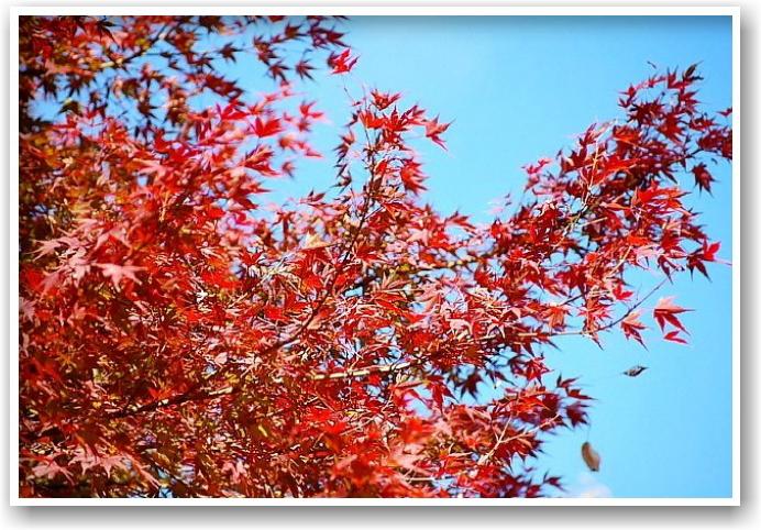 it\'s a clear autumn day_d0083623_21261214.jpg