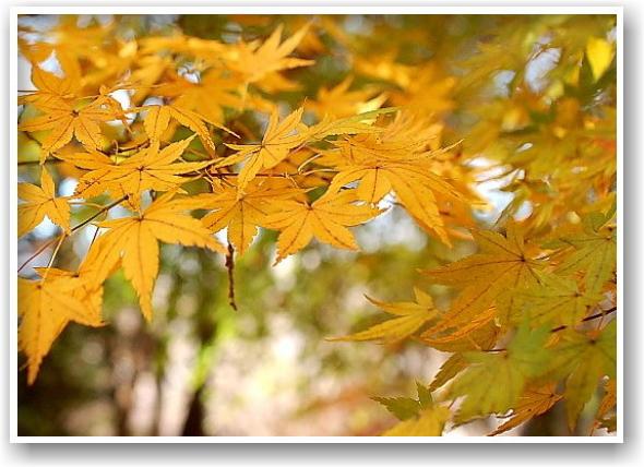 it\'s a clear autumn day_d0083623_2127432.jpg