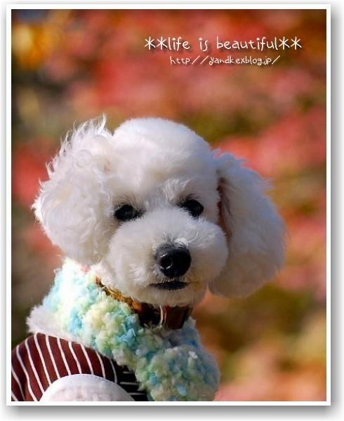 it\'s a clear autumn day_d0083623_212797.jpg
