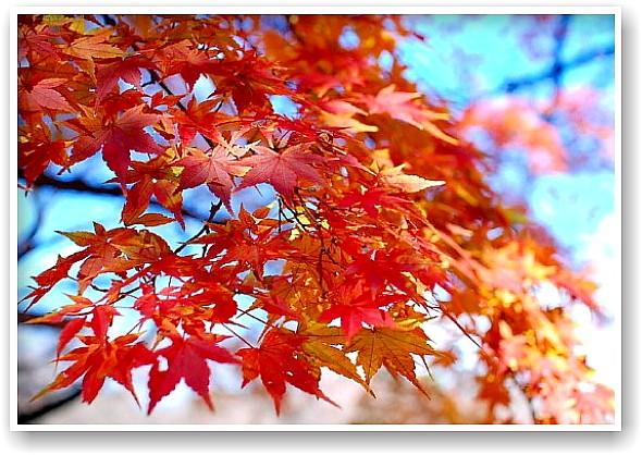 it\'s a clear autumn day_d0083623_21281397.jpg