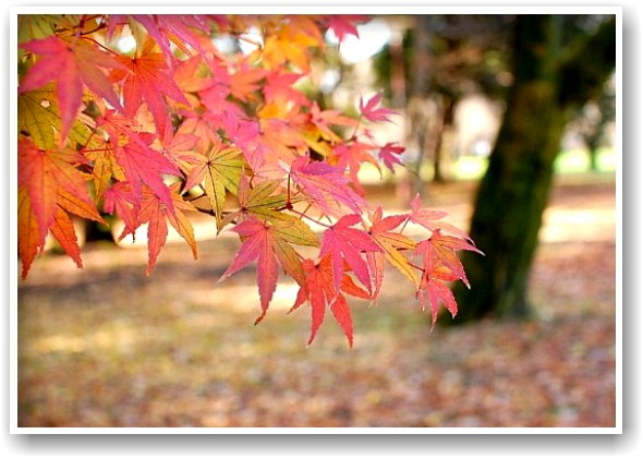 it\'s a clear autumn day_d0083623_21283763.jpg