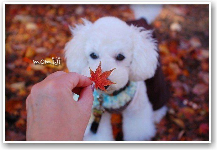 it\'s a clear autumn day_d0083623_2129833.jpg