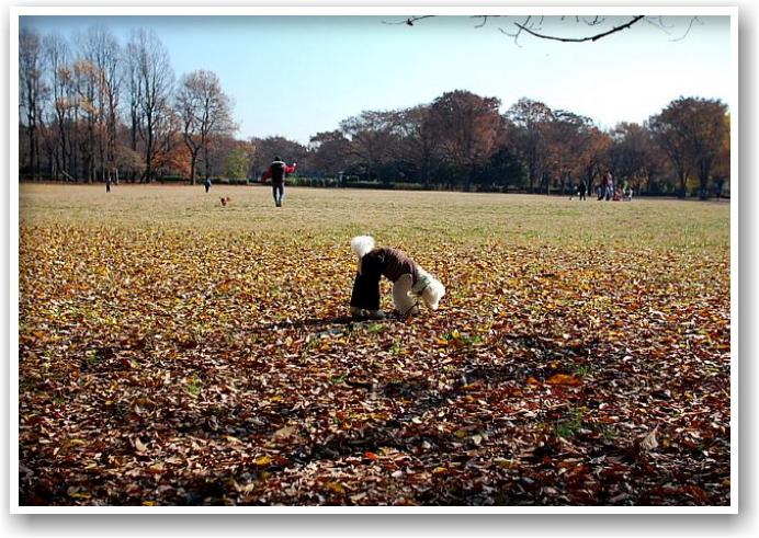 it\'s a clear autumn day_d0083623_21312328.jpg