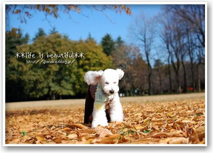it\'s a clear autumn day_d0083623_2132832.jpg
