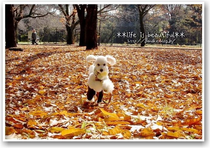 it\'s a clear autumn day_d0083623_21332184.jpg