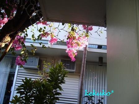 f0170524_98133.jpg