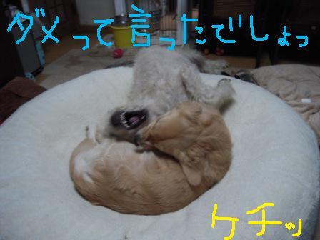 f0176830_1832640.jpg