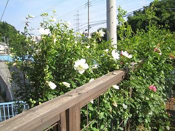 2008 LOG夏春の風景 _c0038619_16183959.jpg