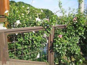 2008 LOG夏春の風景 _c0038619_16184647.jpg