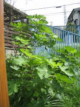 姫リンゴ 穫ったどー _c0038619_18455823.jpg