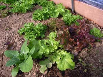 ハウス栽培の野菜_c0063348_17135237.jpg