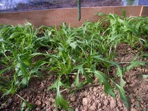ハウス栽培の野菜_c0063348_1714628.jpg