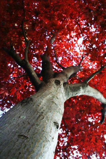 『生命の樹』_e0126350_23335838.jpg