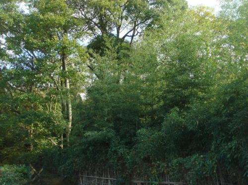 ナショナル花苑「竹伐り」手伝い_c0108460_16323650.jpg