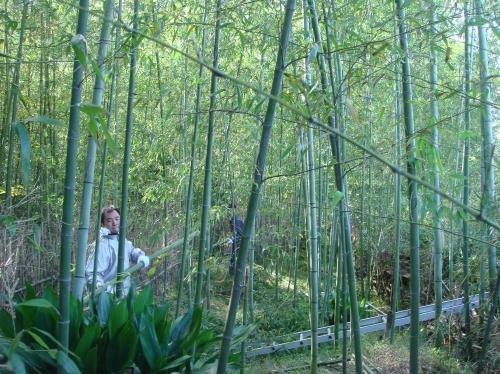 ナショナル花苑「竹伐り」手伝い_c0108460_16385420.jpg