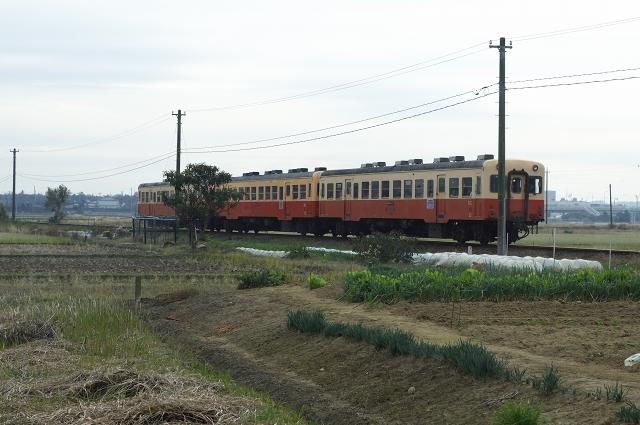 紅葉列車_f0018464_2014234.jpg