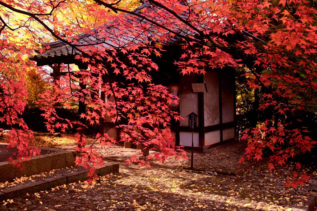京都 真如堂_f0021869_2250124.jpg