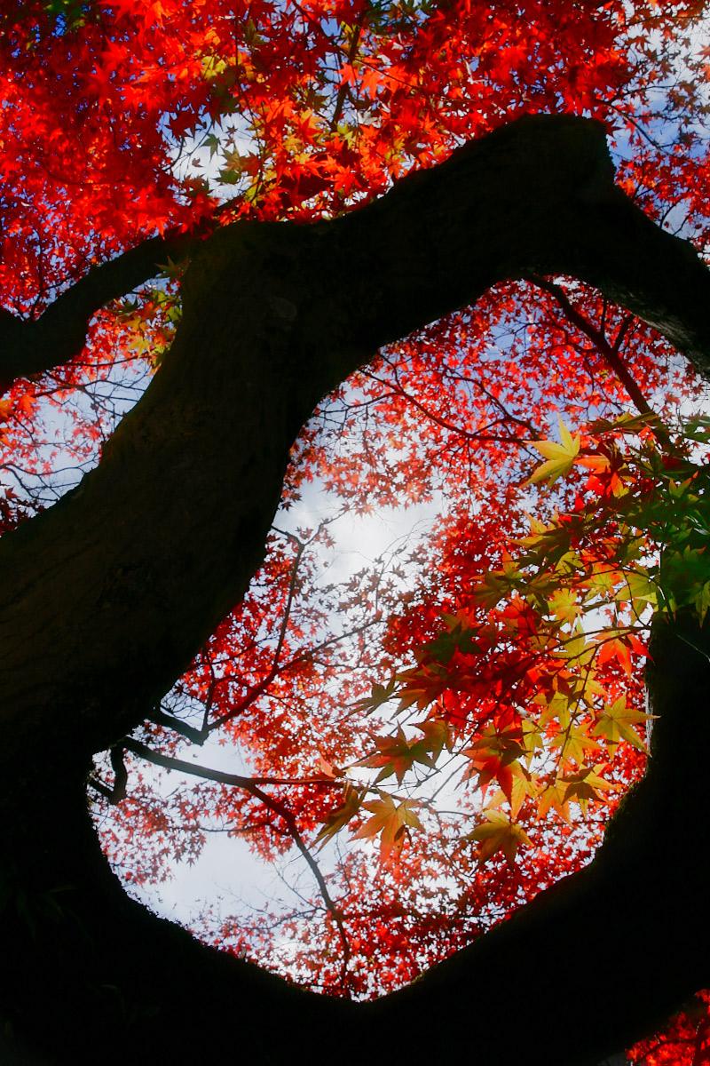 京都 真如堂_f0021869_2253151.jpg