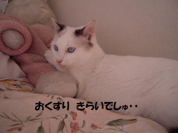 c0139488_16385034.jpg