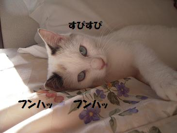 c0139488_16413147.jpg