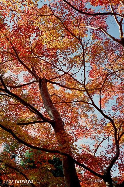 Nov.  30  (Sun)   紅葉 5_f0139991_2227760.jpg